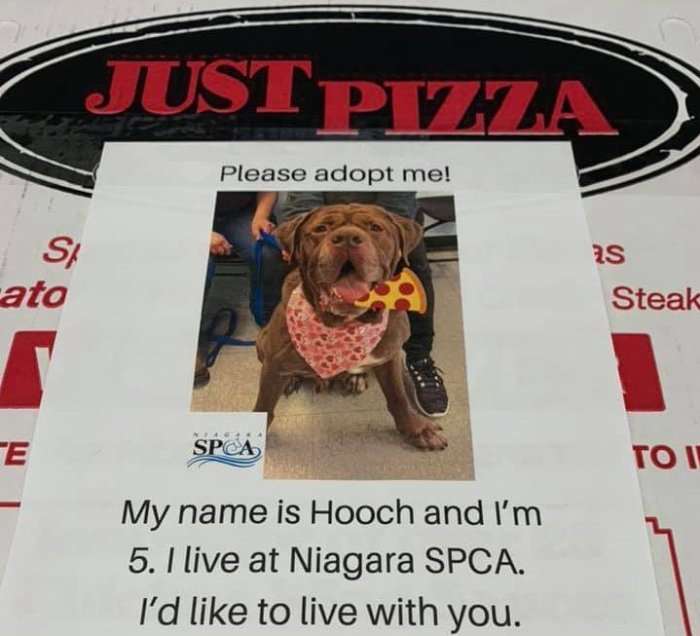 just pizza adoptable dogs