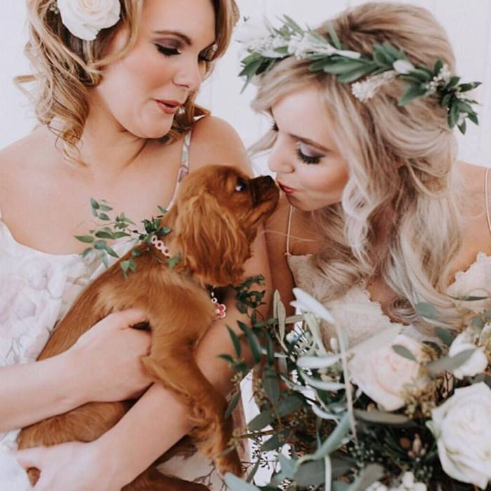 bride kissing puppy