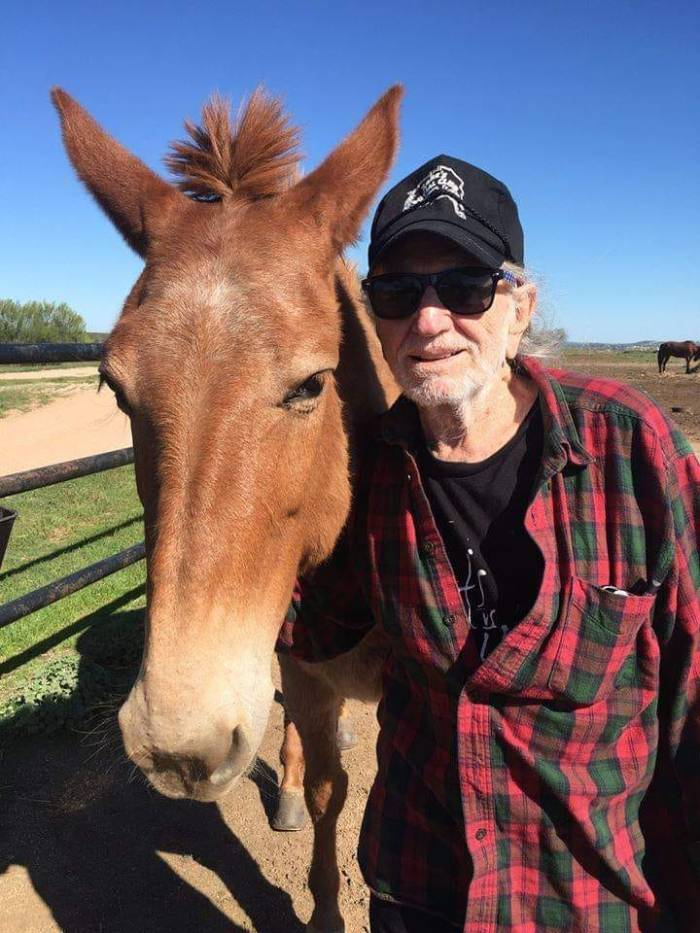 willie nelson horse from Luck Ranch
