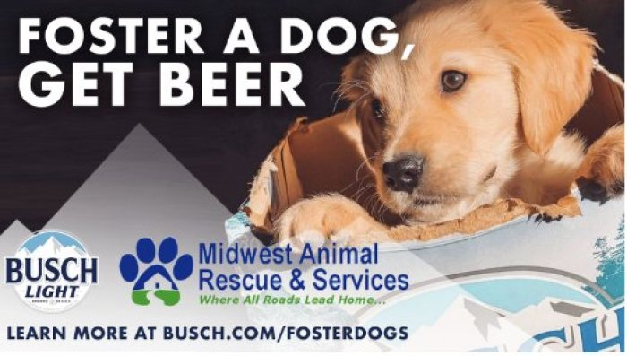 foster a dog and get free busch beer