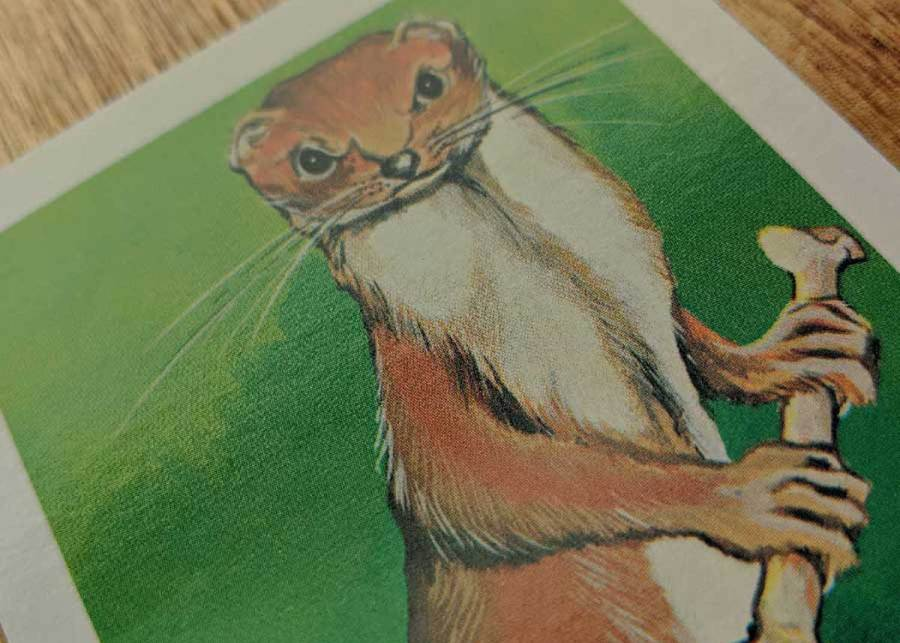 Giant Weasel Dungeons & Dragons Monster Card