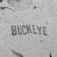 Cincinnati Buckeye Logo