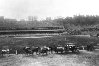 Polo Grounds III in Manhattan, NY