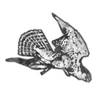 Waterloo Hawks Logo