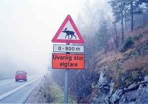Moose warning sign