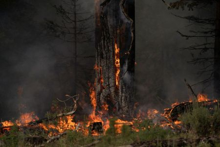 Extreme Heat Destroys Christmas Tree Crops in Oregon