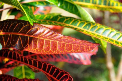 Jungle foliage is quite festive