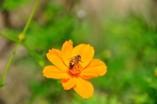 Bees and flowers have got to be one of the oldest love affairs