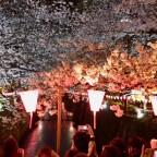Japanese Spring Break