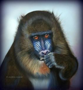 """""""Blue-Monkey"""" d'après une photo de Nadège Gascon - DISPO"""