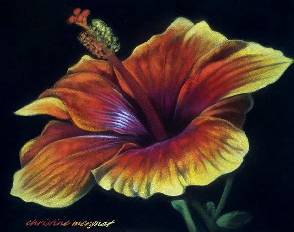 """""""hibiscus"""" d'après une photo de Patrick Michau - DISPO"""