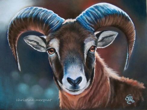 """""""mouflon"""" d'après une photo de Shuttersock images - DISPO"""