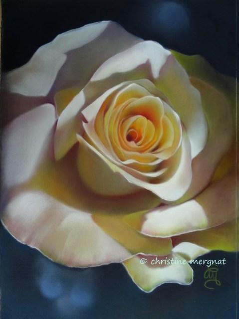 """""""Rose blanche"""" DISPO"""