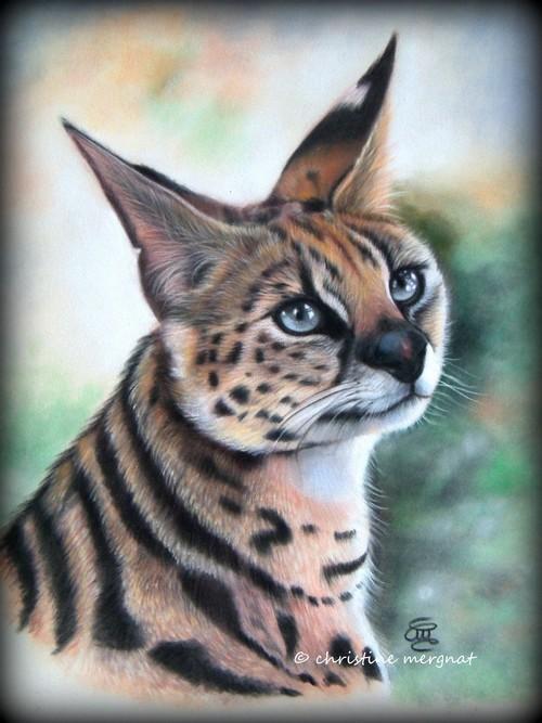 """""""Serval"""" d'après une photo de Nadege Gascon - DISPO"""