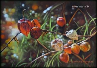 """""""Sunny hearts"""" d'après une photo de Julie Milloux - DISPO"""