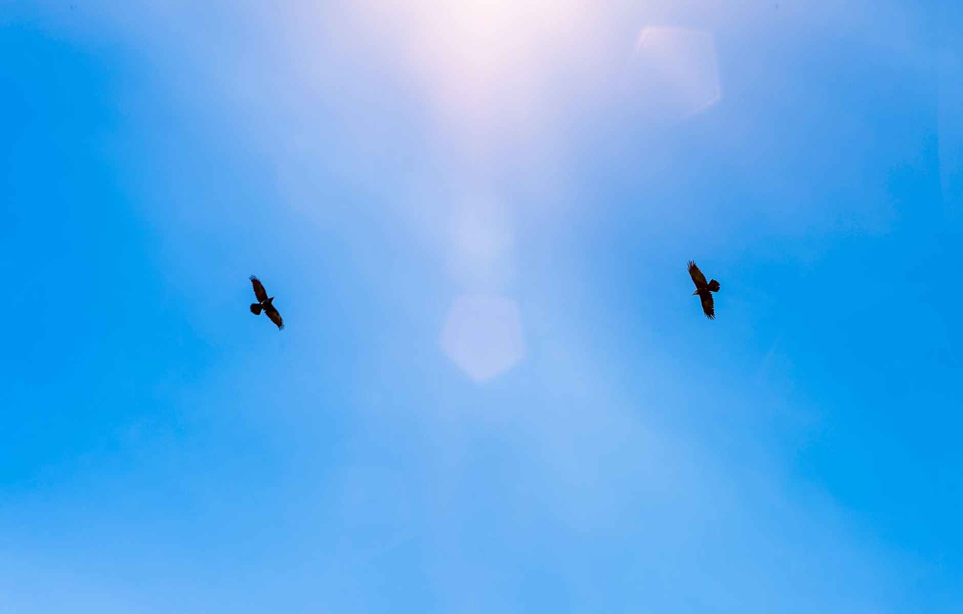 two birds soaring in clear blue skies