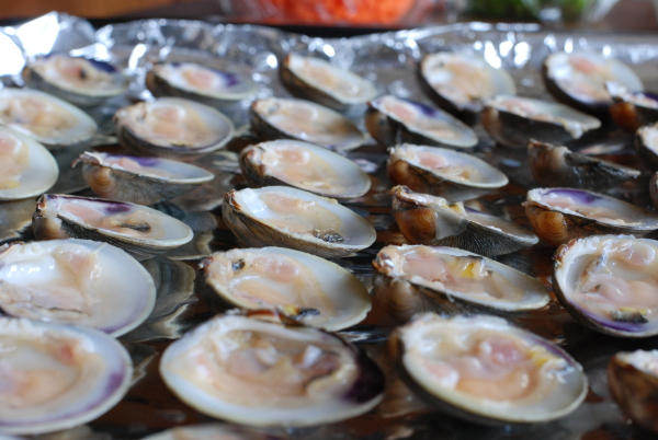 Raw little neck clams