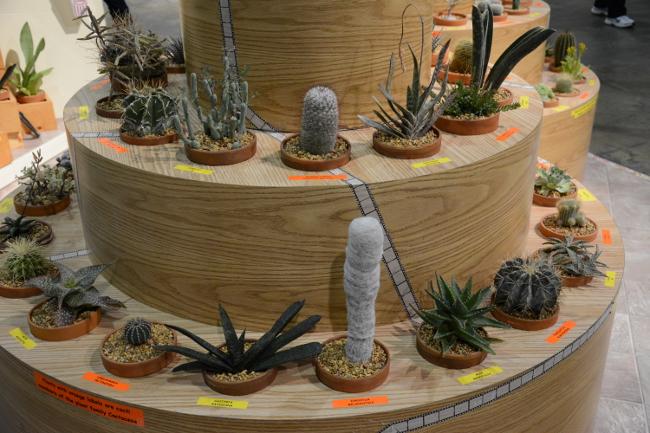 cacti at the philadelphia flower show