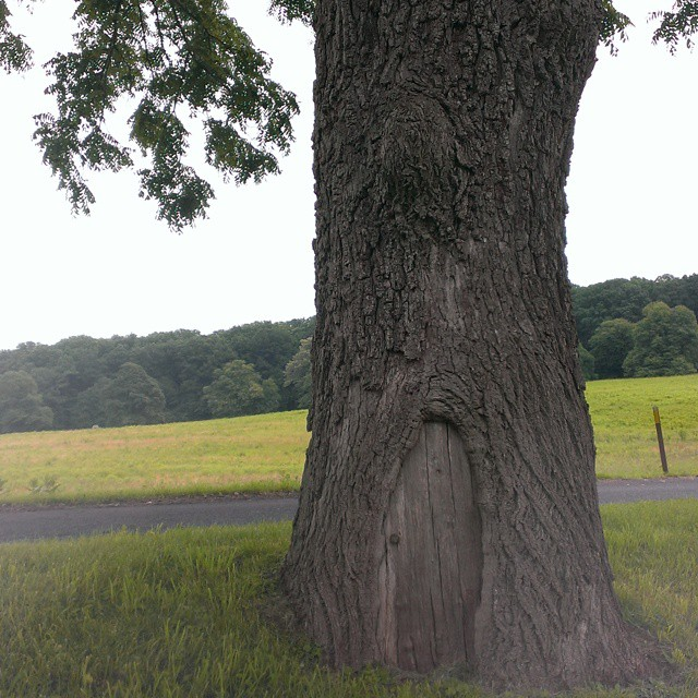 valley forge tree with door