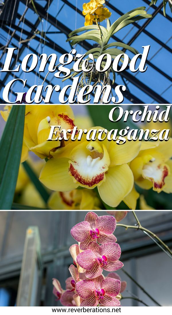 Each winter Longwood Gardens in Kennett Square, Pennsylvania holds Orchid Extravaganza. Their 4-acre Conservatory is simply dripping in orchids of seemingly every type, color and style.