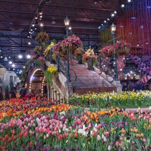 philadelphia flower show 2017 holland flowering the world