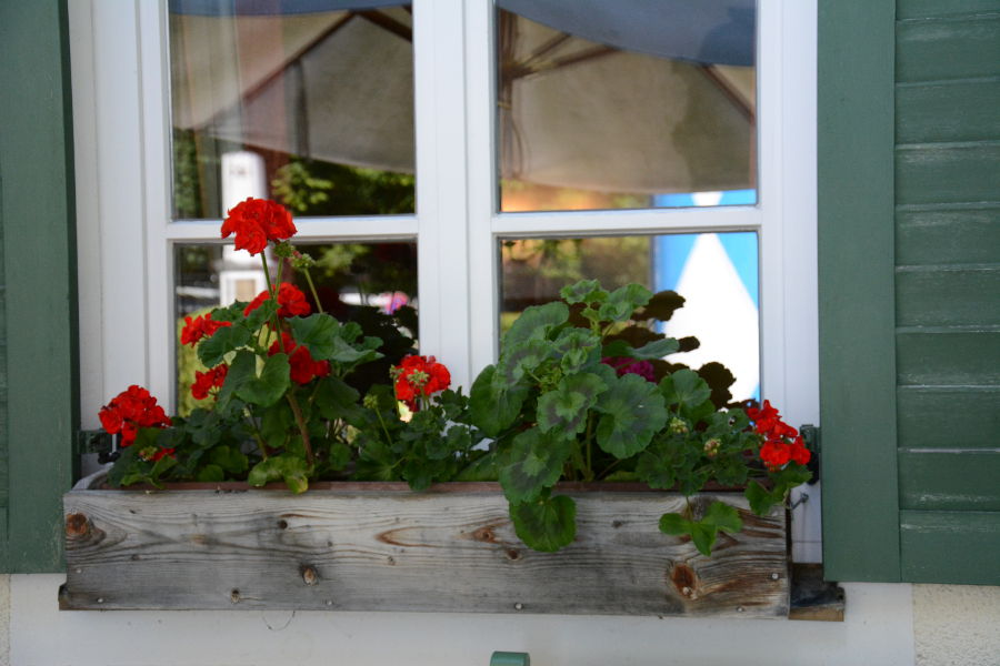 Geranium window flower boxes in Aying, Germany.