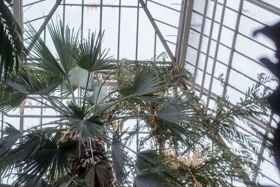 Looking up inside the palm house at Munich Botanical Garden in Germany.