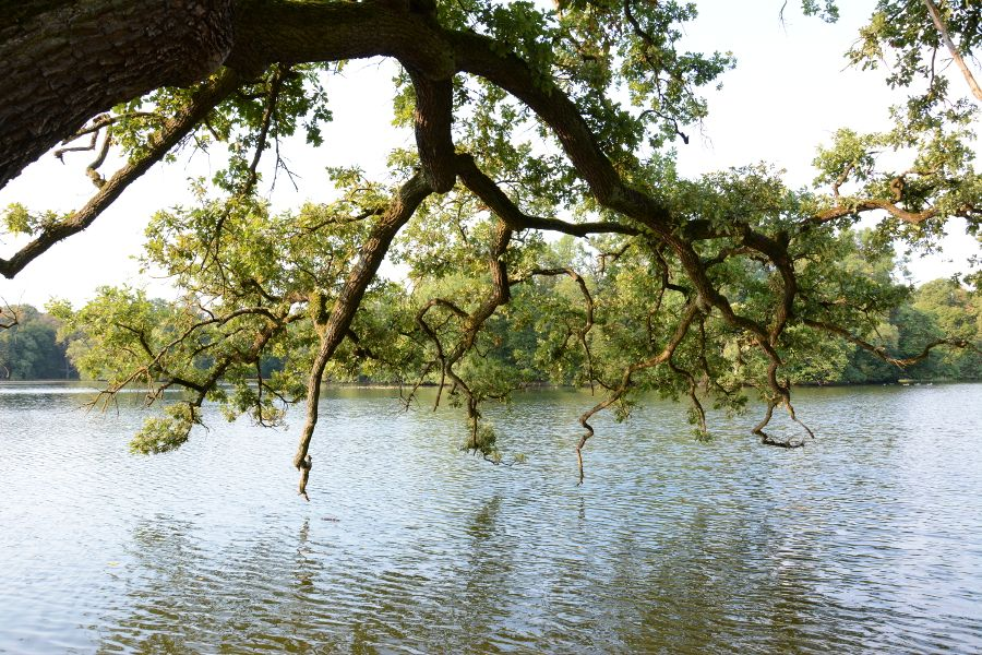 Tree hanging over Badenburg Lake in Munich, Germany.
