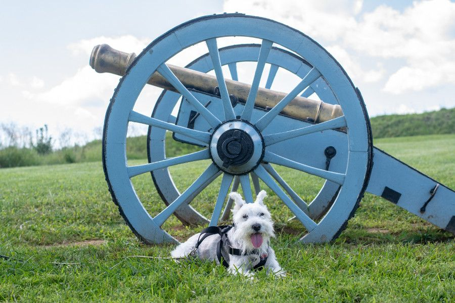 George, the mini schnauzer, lays in front of a cannon at Valley Forge.