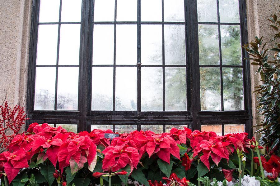 Each year Longwood Gardens impresses with their A Longwood Christmas exhibit.