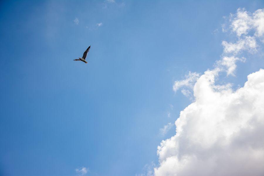 Seagull flying over Port of Hamburg in Germany.