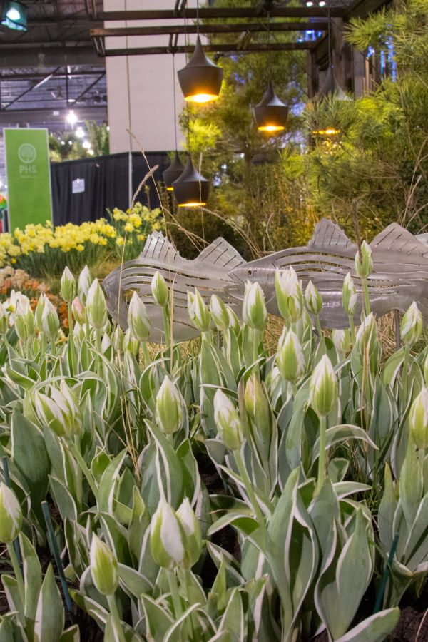 Tulips and decorative fish at Philadelphia Flower Show 2018.