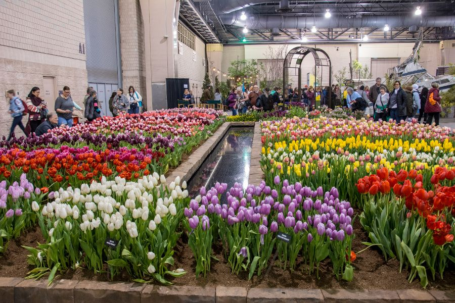 Tulips of all colors on display at the Philadelphia Flower Show 2018.