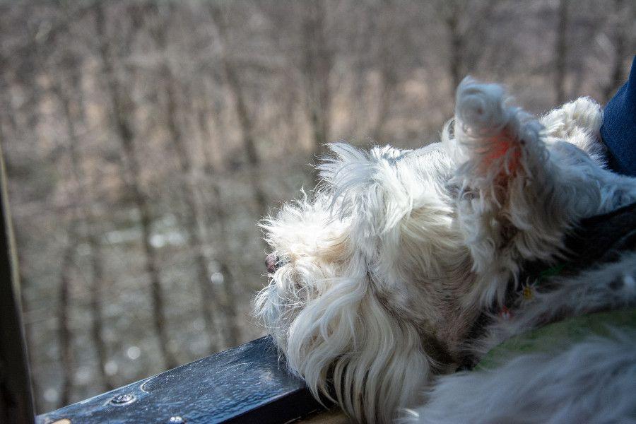 Enjoying the view on the dog friendly Lehigh Gorge Scenic Railway.