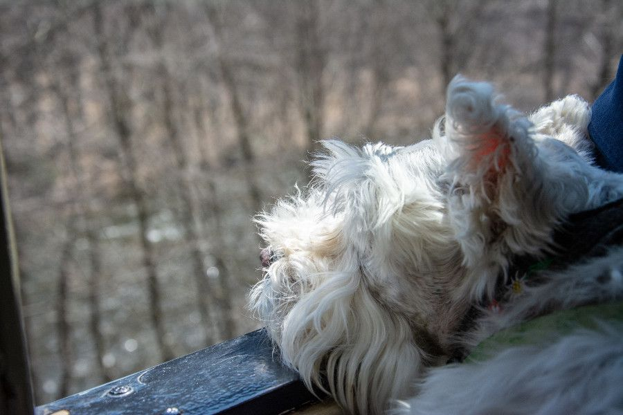 Enjoying the view on the dog friendly Lehigh Gorge Scenic Railway.
