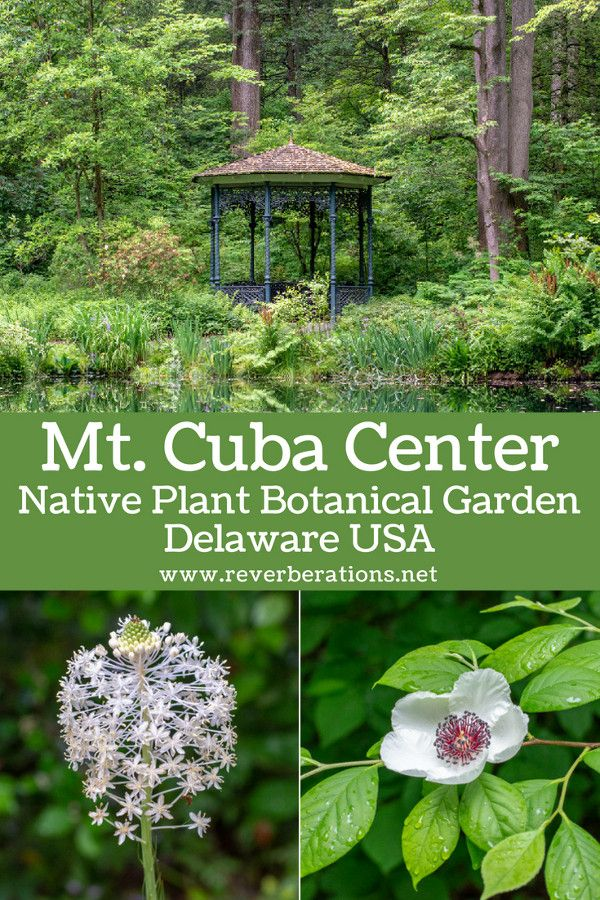 Hidden in suburban Delaware, Mt. Cuba Center is a beautiful garden full of native plants. A guide to visiting Mt. Cuba Center in Hockessin, Delaware. #delaware #visitwilm #garden #travel