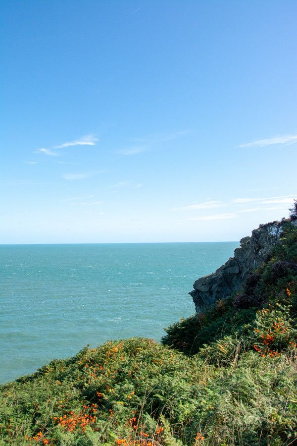 A cliff covered in flowers in Howth.