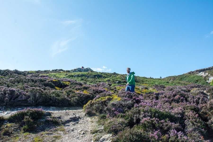 Wandering among flowers on the Howth cliff walk.