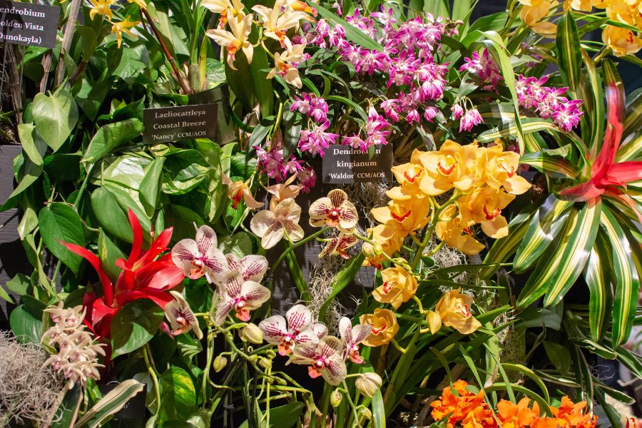 A colorful collection of flowers, including orchids, at the Flower Show.