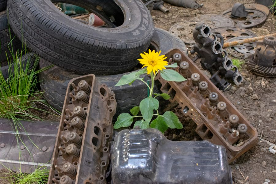 Williamson Trade School's Flower Show exhibit details how plants can clean soil.