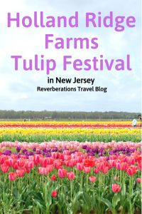 Be transported to the Netherlands with a visit to New Jersey's Holland Ridge Farms Tulip Festival. The acres of beautiful tulips is a spring must see! #tulips #tulipfestival #newjersey