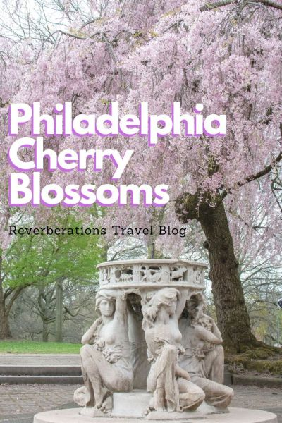 Don't overlook the Philadelphia cherry blossoms in your quest to welcome spring. From where to find the trees to all about the Philadelphia sakura festival. #philadelphia #pennsylvania #usa #cherryblossoms #sakura