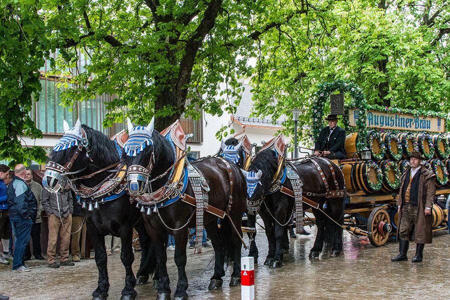 Horses pull the Augustiner parade float for Munich Frühlingsfest.