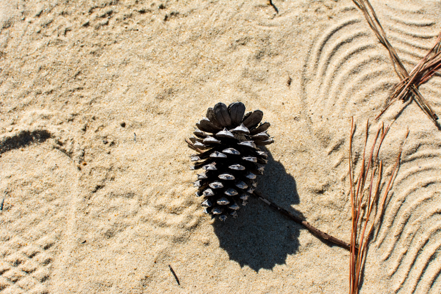 A pinecone in the sand.