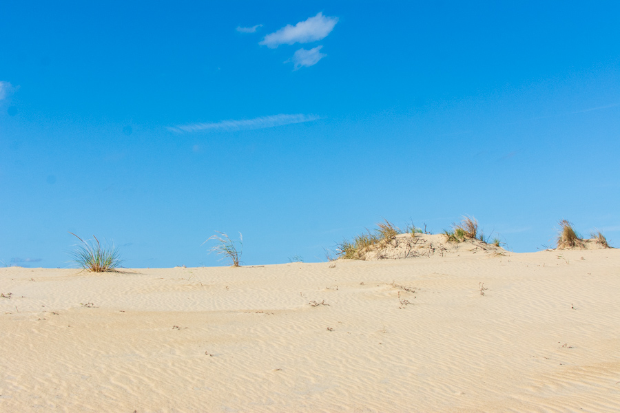 The top of sand dunes.