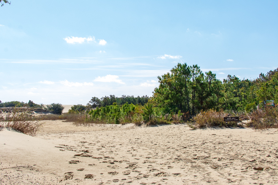 Jockey's Ridge State Park is comprised of multiple ecosystems.
