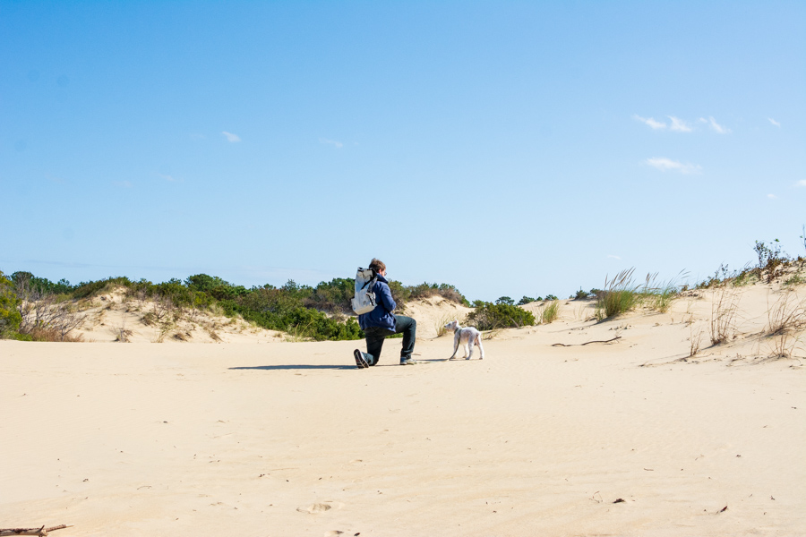 Jockey's Ridge State Park in Nags Head, North Carolina, is dog-friendly.