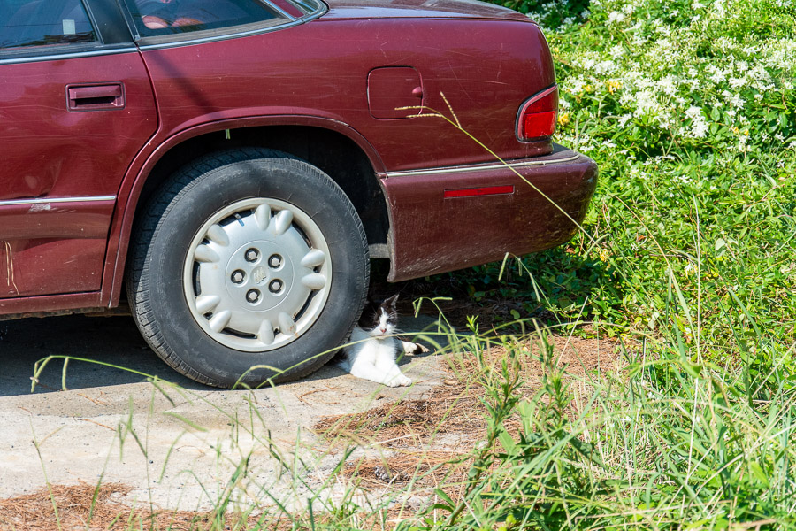 A cat hides from the sun and any visitors under a car.