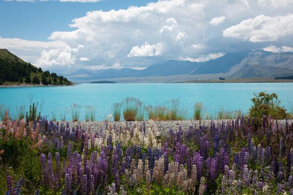 Lake Tekapo avec des fleurs