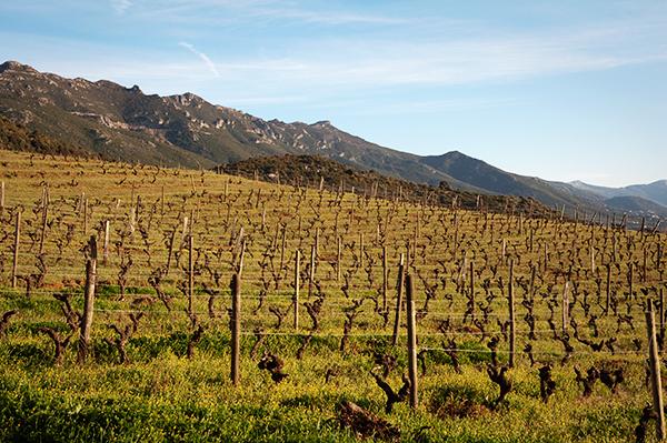 Vignoble AOC de Patrimonio